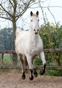 Paardenopvang Rainbow Riders Ranch